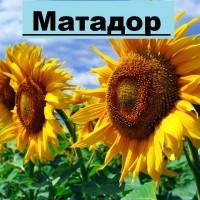 Продаємо насіння соняшнику Матадор