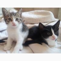 Котята- симпатюли