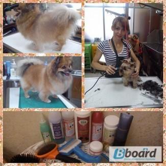 Груминг, стрижка собак в Днепропетровске