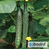 Продам семена Огурец Пекинский вкусный F1