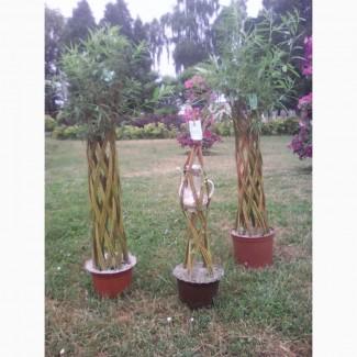 Живе плетене дерево Зелена Корона(датське коріння)