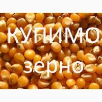 Закуповуємо по Тернопільській області кукурудзу