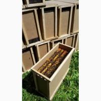 Продам пчелопакеты высшего качества