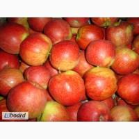 Продам яблоки из Польши - очень большой опт