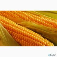 Закупаем кукурузу по Луганской обл