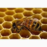 Куплю мед оптом без аналізів (Антибіотик)
