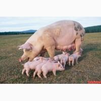Бест Микс БМВД 8341 гроуэр (свиньи 20-45 кг) 15%, мешки по 25 кг