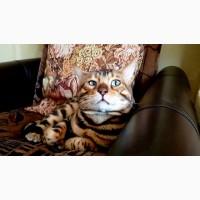 Бенгальские котята для души и в разведение