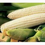 Семена Сахарной кукурузы весовые и пакетированные с первых рук