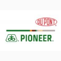 Распродажа семенян подсолнуха под гранстар Пионер PR64e71, P64LE25, P64LE99, P63LE113