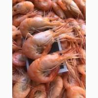 Креветка черноморская варенная, живая-сырая