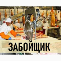 Требуется Забойщик на мясную Линию Польша