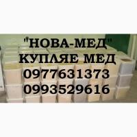 Оптовая закупка мёда с РАПСА и ПОДСОЛНУХА. Вся Украина