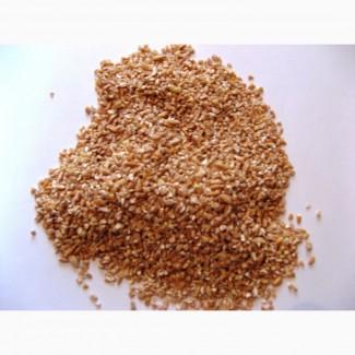 Крупа пшеничная на корм собакам