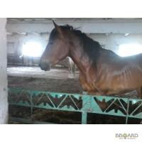 Продам коня 4 года