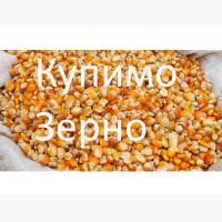 Компанія постійно і дорого закуповує кукурудзу