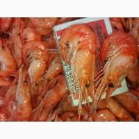 Продам черноморскую креветку средних размеров черноморские(рачки)