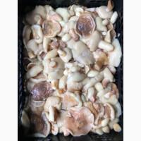 Продам грибы Белые, маслята, опята, лисички