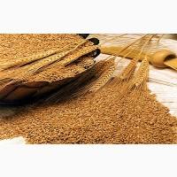 Куплю пшеницю, ячмінь дорого. Урожай 2018 р