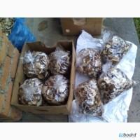 Продам белые сухие грибы из Закарпатье по 800 гр