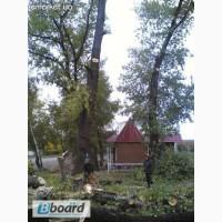 Спил деревьев, спилить деревья, ветки, удалить пень Харьков