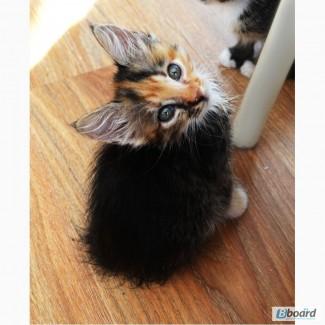 Дмашние котята