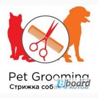 Стрижка собак и котов в оборудованном Салоне, услуги от 100 гр