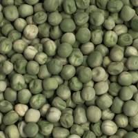 Дубайська компанія закуповує льон і горох зелений для експорту