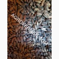 Семена подсолнечника PAYTON F 236 (под гранстар) канадский трансгенный гибрид
