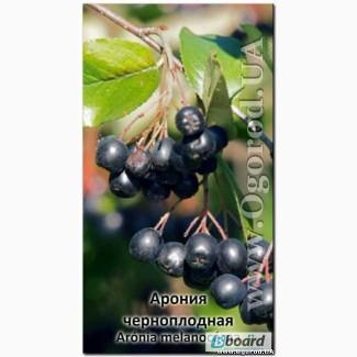 Семена аронии черноплодной - 15 ягод