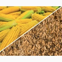 Насіння кукурудзи гібрид Онікс