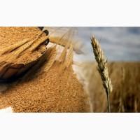 Куплю пшеницу в ассортименте, ячмень, сою, кукурузу, подсолнечник, семечки. Днепр