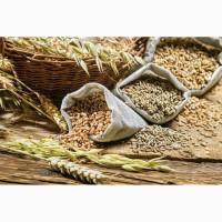 Закупка зерновых оптом. Самовывоз