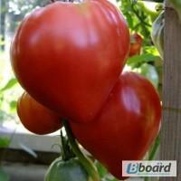 Продам семена Томат Воловье сердце (красное)
