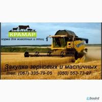 Куплю ячмень, кукурузу, пшеницу