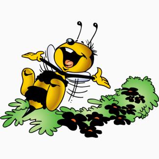 Покупаю мед от 500 кг в Днепропетровской обл