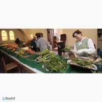 Упаковщики, сортировщики овощей в Польше