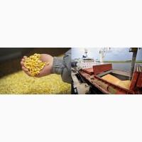 Corn 3 grade FOB Odessa