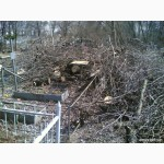 Обрезка деревьев, спилить деревья, ветки, удалить пень Харьков