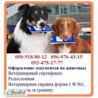 Оформление ветеринарных документов на животных - быстрое оформление справка форма 1 Ф 1