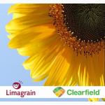 Лимагрейн ЛГ 5661 КЛ среднепоздний гибрид устойчивый к евро-лайтингу