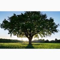 Предоставляем услуги по корчеванию деревьев, пней, корневищ