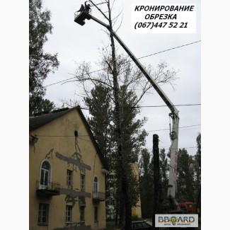 Кронирование деревьев Киев. Обрезка веток. Удаление деревьев Киев. Корчевание пней.