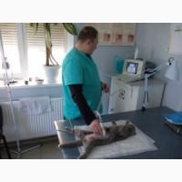 Ветклиника ЗооДоктор - все виды ветеринарных услуг, Харьков