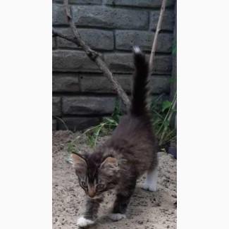 Котята добрым людям