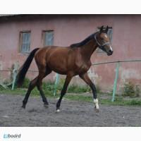 Продам лошадь. Цена срочной продажи