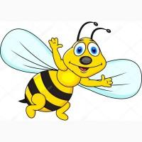Купую мед оптом