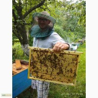 Продам пчелопакеты украинской степной породи БДЖОЛОПАКЕТЫ