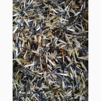 Насіння чорнобривці семена бархатцы