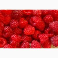 Продаж замороженої ягоди малини